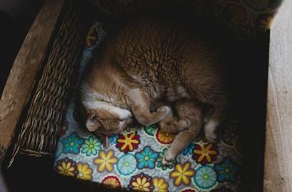 Qu'est-ce que l'apnée du sommeil ?