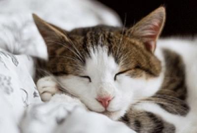 Des phénomènes étranges que votre corps fait à votre insu lorsque vous dormez !